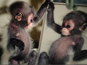monkeymirror1